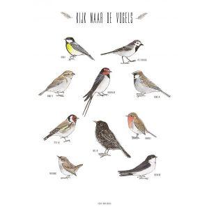 A4 poster vogels Marieke ten Berge 1
