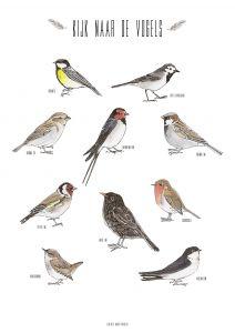 A4 poster vogels Marieke ten Berge 2