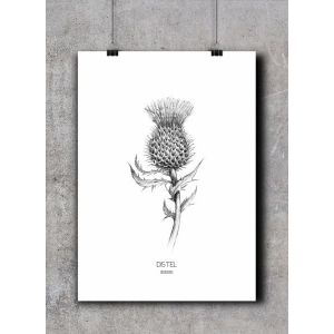 Poster distel, BDDesigns 1