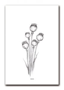 Poster papaver A4 BDDesigns 2