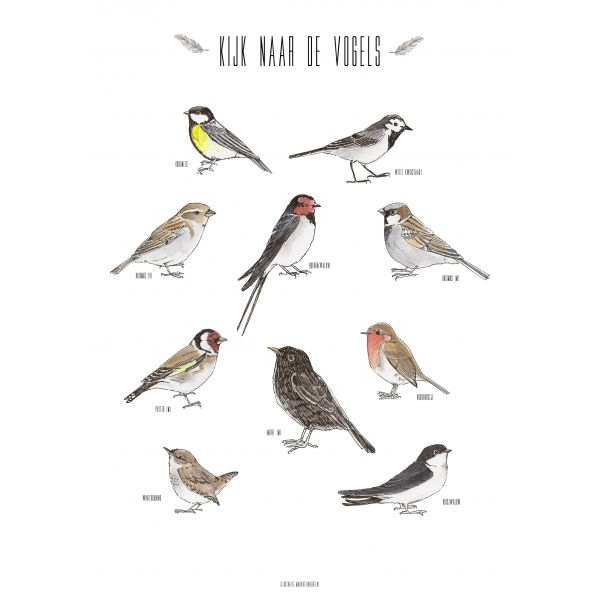 A4 poster vogels Marieke ten Berge