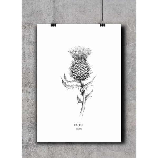 Poster distel, BDDesigns
