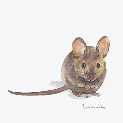 Minikaartje muis, Ingrid van der Krol