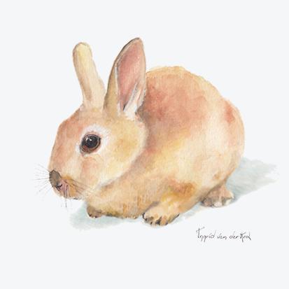 Minikaartje konijn, Ingrid van der Krol