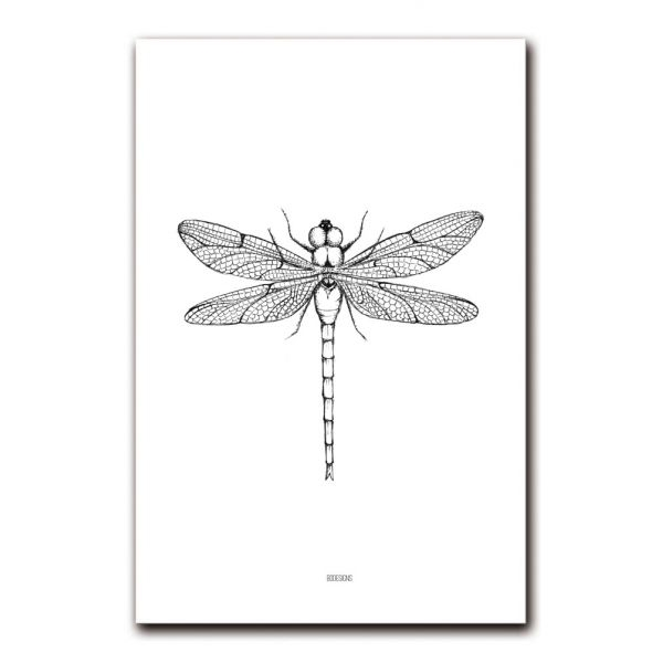 Libelle poster A4 BDDesigns